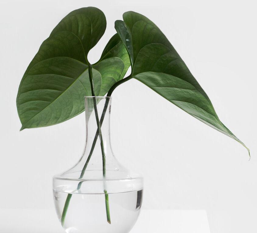 Graphic design stylish vase